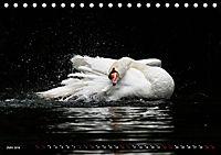 Kalender - Das Morgenbad des Höckerschwans (Tischkalender 2019 DIN A5 quer) - Produktdetailbild 6