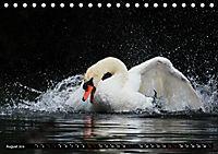 Kalender - Das Morgenbad des Höckerschwans (Tischkalender 2019 DIN A5 quer) - Produktdetailbild 8