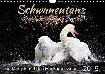 Kalender - Das Morgenbad des Höckerschwans (Wandkalender 2019 DIN A4 quer), Sylvio Banker