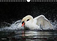 Kalender - Das Morgenbad des Höckerschwans (Wandkalender 2019 DIN A4 quer) - Produktdetailbild 8