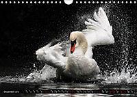 Kalender - Das Morgenbad des Höckerschwans (Wandkalender 2019 DIN A4 quer) - Produktdetailbild 12