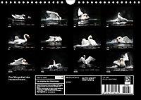 Kalender - Das Morgenbad des Höckerschwans (Wandkalender 2019 DIN A4 quer) - Produktdetailbild 13