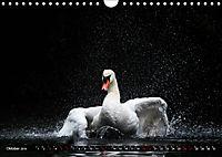 Kalender - Das Morgenbad des Höckerschwans (Wandkalender 2019 DIN A4 quer) - Produktdetailbild 10