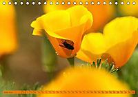 Kalifornischer Goldmohn (Tischkalender 2019 DIN A5 quer) - Produktdetailbild 6