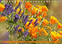 Kalifornischer Goldmohn (Tischkalender 2019 DIN A5 quer) - Produktdetailbild 4