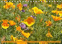 Kalifornischer Goldmohn (Tischkalender 2019 DIN A5 quer) - Produktdetailbild 1