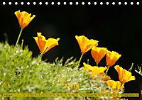 Kalifornischer Goldmohn (Tischkalender 2019 DIN A5 quer) - Produktdetailbild 7
