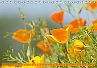 Kalifornischer Goldmohn (Tischkalender 2019 DIN A5 quer) - Produktdetailbild 9