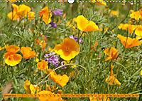 Kalifornischer Goldmohn (Wandkalender 2019 DIN A3 quer) - Produktdetailbild 1