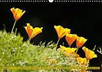 Kalifornischer Goldmohn (Wandkalender 2019 DIN A3 quer) - Produktdetailbild 7