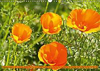 Kalifornischer Goldmohn (Wandkalender 2019 DIN A3 quer) - Produktdetailbild 10