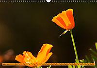 Kalifornischer Goldmohn (Wandkalender 2019 DIN A3 quer) - Produktdetailbild 3