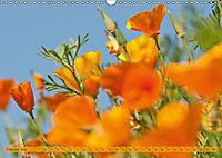 Kalifornischer Goldmohn (Wandkalender 2019 DIN A3 quer) - Produktdetailbild 2