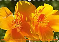 Kalifornischer Goldmohn (Wandkalender 2019 DIN A3 quer) - Produktdetailbild 5