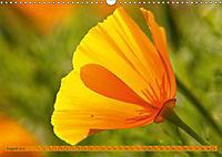 Kalifornischer Goldmohn (Wandkalender 2019 DIN A3 quer) - Produktdetailbild 8