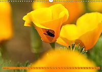 Kalifornischer Goldmohn (Wandkalender 2019 DIN A3 quer) - Produktdetailbild 6