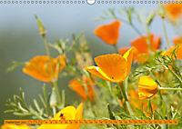 Kalifornischer Goldmohn (Wandkalender 2019 DIN A3 quer) - Produktdetailbild 9