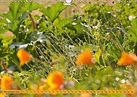 Kalifornischer Goldmohn (Wandkalender 2019 DIN A3 quer) - Produktdetailbild 11