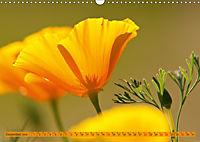 Kalifornischer Goldmohn (Wandkalender 2019 DIN A3 quer) - Produktdetailbild 12