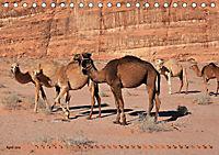Kamele - Die freundlichen Gepäckträger (Tischkalender 2019 DIN A5 quer) - Produktdetailbild 4
