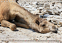 Kamele - Die freundlichen Gepäckträger (Tischkalender 2019 DIN A5 quer) - Produktdetailbild 3