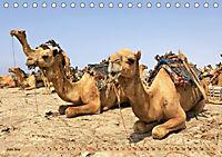 Kamele - Die freundlichen Gepäckträger (Tischkalender 2019 DIN A5 quer) - Produktdetailbild 6