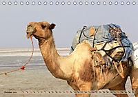 Kamele - Die freundlichen Gepäckträger (Tischkalender 2019 DIN A5 quer) - Produktdetailbild 10