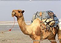 Kamele - Die freundlichen Gepäckträger (Wandkalender 2019 DIN A2 quer) - Produktdetailbild 10