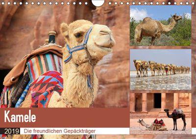 Kamele - Die freundlichen Gepäckträger (Wandkalender 2019 DIN A4 quer), Michael Herzog