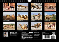 Kamele - Die freundlichen Gepäckträger (Wandkalender 2019 DIN A4 quer) - Produktdetailbild 13