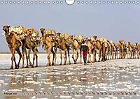 Kamele - Die freundlichen Gepäckträger (Wandkalender 2019 DIN A4 quer) - Produktdetailbild 2