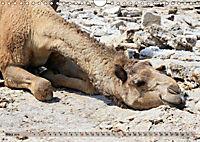 Kamele - Die freundlichen Gepäckträger (Wandkalender 2019 DIN A4 quer) - Produktdetailbild 3
