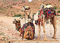 Kamele - Die freundlichen Gepäckträger (Wandkalender 2019 DIN A4 quer) - Produktdetailbild 12