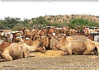 Kamele - Die freundlichen Gepäckträger (Wandkalender 2019 DIN A2 quer) - Produktdetailbild 9
