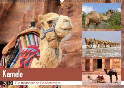 Kamele - Die freundlichen Gepäckträger (Wandkalender 2019 DIN A2 quer), Michael Herzog