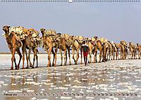 Kamele - Die freundlichen Gepäckträger (Wandkalender 2019 DIN A2 quer) - Produktdetailbild 2