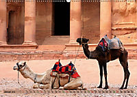 Kamele - Die freundlichen Gepäckträger (Wandkalender 2019 DIN A2 quer) - Produktdetailbild 1