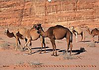 Kamele - Die freundlichen Gepäckträger (Wandkalender 2019 DIN A2 quer) - Produktdetailbild 4