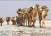 Kamele - Die freundlichen Gepäckträger (Wandkalender 2019 DIN A2 quer) - Produktdetailbild 11
