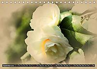 Kamelien Blüten (Tischkalender 2019 DIN A5 quer) - Produktdetailbild 9