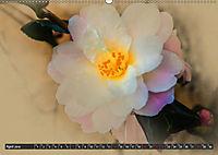 Kamelien Blüten (Wandkalender 2019 DIN A2 quer) - Produktdetailbild 4