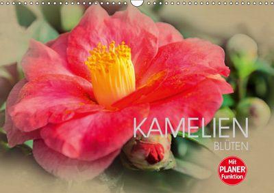 Kamelien Blüten (Wandkalender 2019 DIN A3 quer), Dirk Meutzner