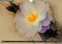 Kamelien Blüten (Wandkalender 2019 DIN A4 quer) - Produktdetailbild 4