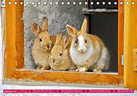 Kaninchen. Putzig, flauschig und geliebt (Tischkalender 2019 DIN A5 quer) - Produktdetailbild 2