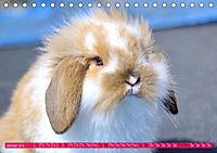 Kaninchen. Putzig, flauschig und geliebt (Tischkalender 2019 DIN A5 quer) - Produktdetailbild 1