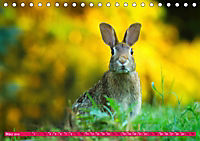 Kaninchen. Putzig, flauschig und geliebt (Tischkalender 2019 DIN A5 quer) - Produktdetailbild 3
