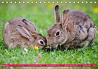 Kaninchen. Putzig, flauschig und geliebt (Tischkalender 2019 DIN A5 quer) - Produktdetailbild 5