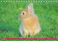 Kaninchen. Putzig, flauschig und geliebt (Tischkalender 2019 DIN A5 quer) - Produktdetailbild 8