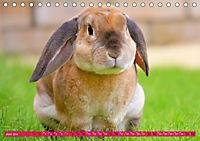 Kaninchen. Putzig, flauschig und geliebt (Tischkalender 2019 DIN A5 quer) - Produktdetailbild 6