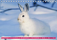 Kaninchen. Putzig, flauschig und geliebt (Tischkalender 2019 DIN A5 quer) - Produktdetailbild 12